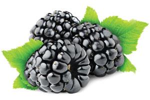 Blackberry-Fruit-Powder-1