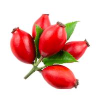 cp-rose_599c5b46ca6e6da7a8bdfd57aff6d45b